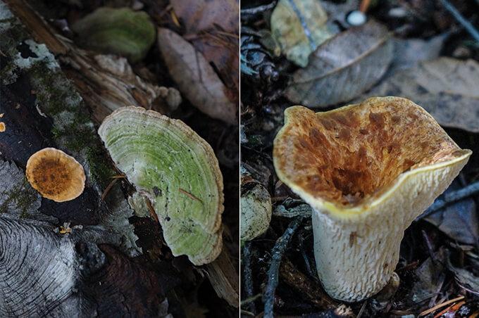 Wild mushroom foraging in Mendocino coast, California | www.viktoriastable.com