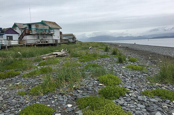 Into the wild Alaska - Homer | www.viktoriastable.com