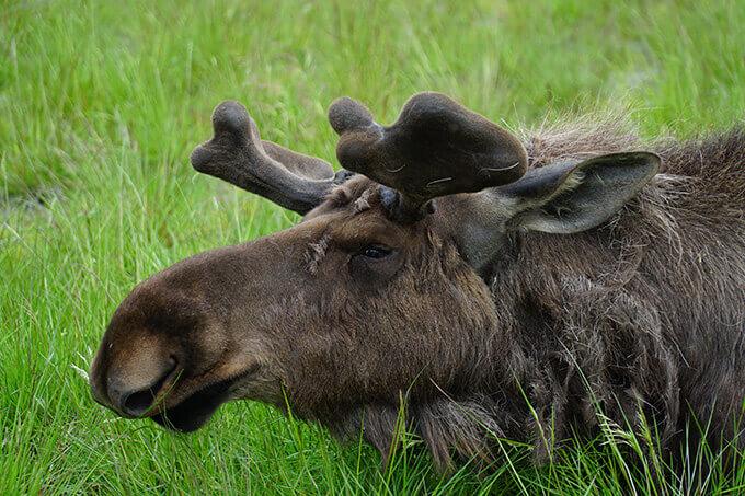 Into the wild Alaska - Alaska Wildlife Conservation Center, Girdwood, AK | www.viktoriastable.com